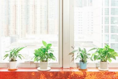 特色盆栽 4種小攻略